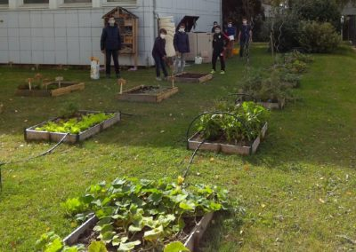 Les carrés de jardin